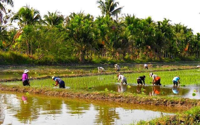 planet-ride-voyage-thailande-moto-rizières-villageois-paysage
