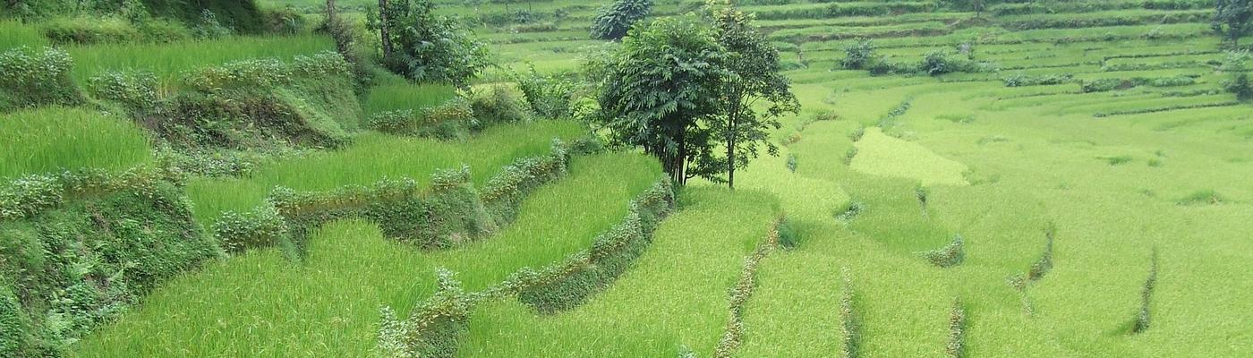 planet-ride-voyage-nepal-moto-1-rizières