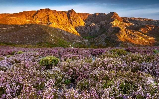 planet-ride-voyage-portugal-moto-6-collines-fleurs