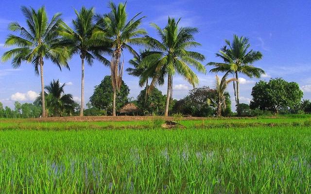 planet-ride-voyage-thaïlande-moto-palmiers-rizières-rural