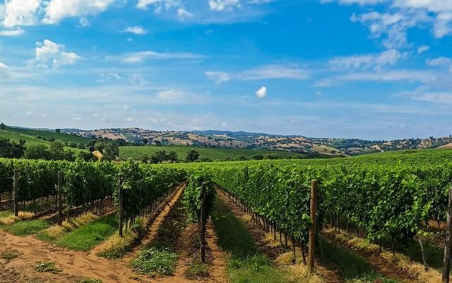 planet-ride-voyage-italie-moto-2-vigne-tuscane-p