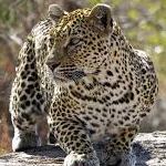 planet ride afrique du sud moto faune J6