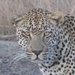 planet ride afrique du sud voyage moto leopard J4