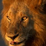 planet ride road trip harley afrique du sud lion J10