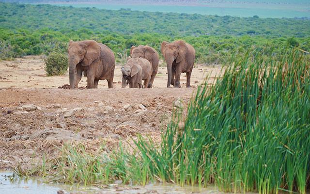 planet ride road trip moto harley afrique du sud parc elephants