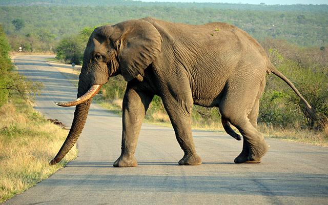 planet ride éléphant route safari parc kruger