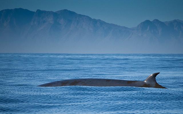 afrique océan baleine