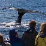 planet ride faune afrique du sud baleine