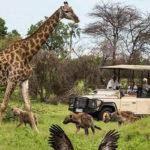 Planet Ride Safari Kruger