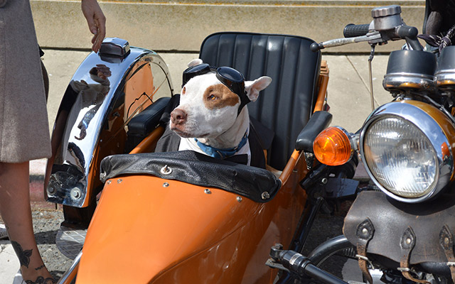 planet ride dgd chien