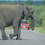 safari kruger 4x4