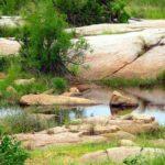 safari kruger afrique du sud vespa