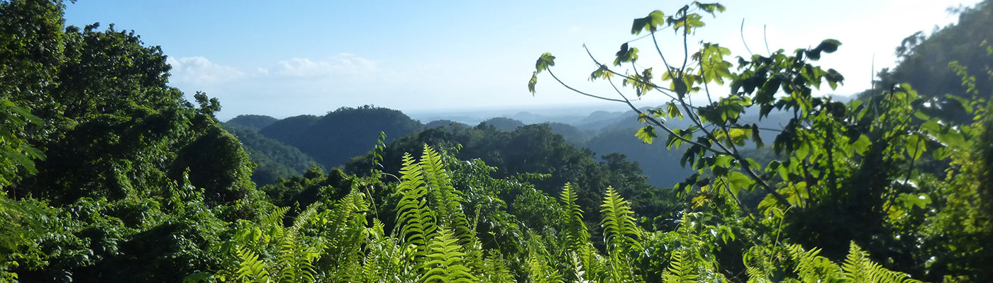 planet-ride-raid-4×4-jamaïque-flore-paysage-slider