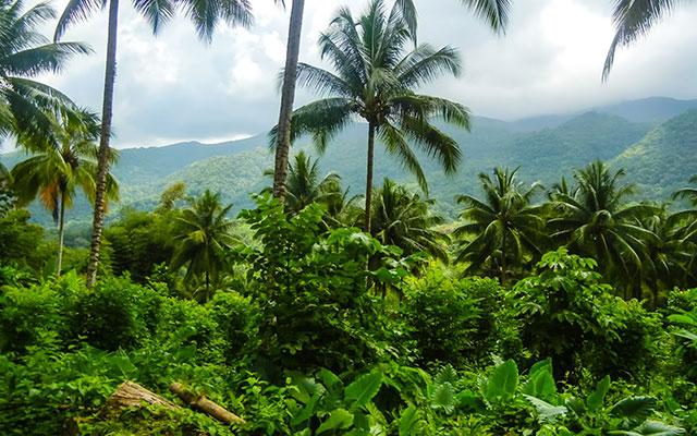 Voyage en Jamaïque en 4x4 avec une agence de voyage locale
