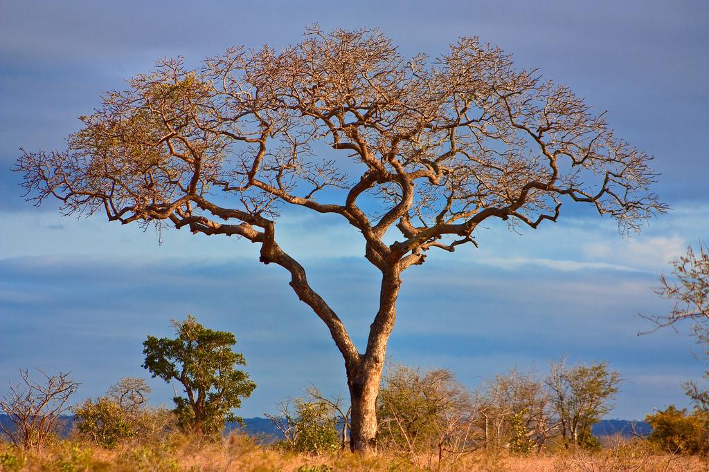 Planet Ride parc Kruger safari animaux