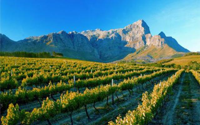 Safari Afrique du Sud vignes pic rocheux