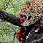 Planet Ride jour 8 félin carnivore safari Kruger