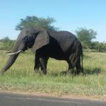 Planet Ride jour 9 safari en afrique du sud éléphant