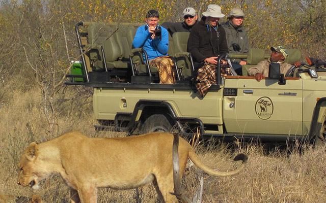 Félins Safari Afrique du Sud