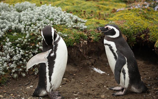 pingouins parc chili