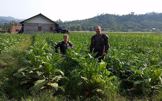 voyage moto Laos plantations