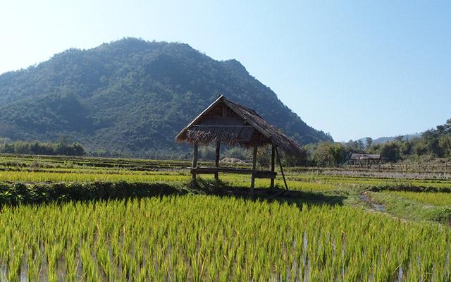 Rizières du nord du Laos Raid Laos