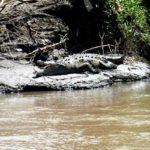 Planet Ride circuit Costa Rica crocodile