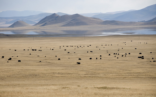 Raid 4x4 Mongolie