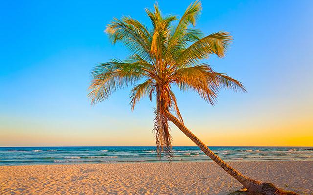 voyage cuba plage cocotier