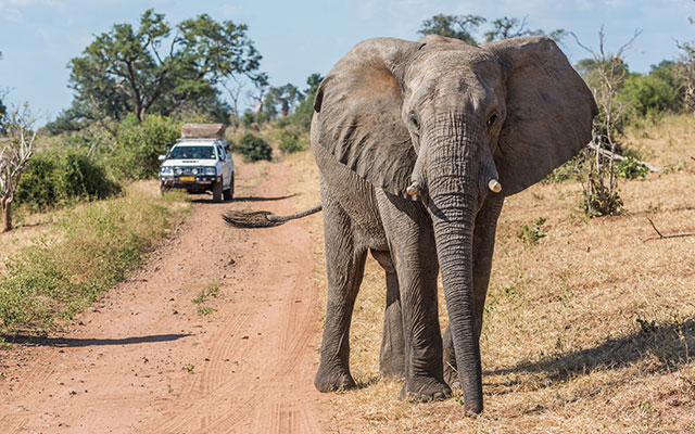 Top 7 safaris