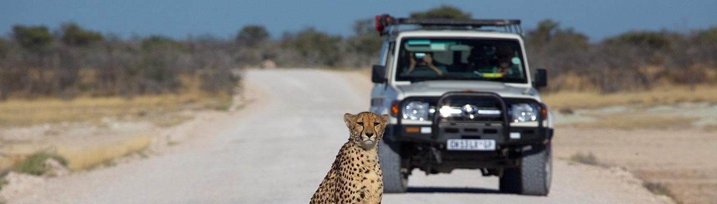 safari namibie